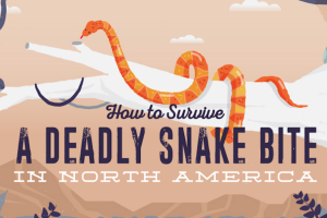 Survive a Deadly Snake Bite